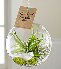 Mother's Day Faith Hanging Air Plant