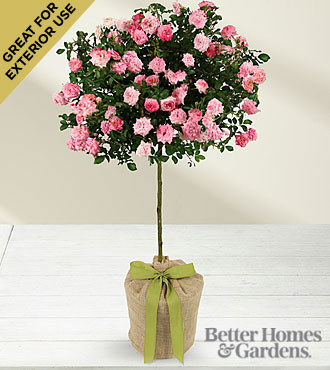 The FTD® Gratitude & Grace for Mother's Day Rose Topiary by Better Homes and Gardens®