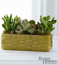The FTD® Bring on the Green Crassula Succulent Garden by Better Homes and Gardens®