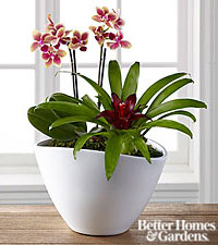 The FTD® Harvest Style Plant Duo by Better Homes and Gardens®