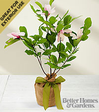 The FTD® Jane Magnolia Tree by Better Homes and Gardens®