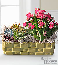 The FTD® Desert Scenes Dish Garden by Better Homes and Gardens®