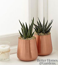The FTD® Gorgeous Glow Succulent Plant Duo by Better Homes and Gardens®