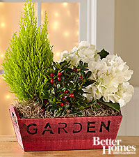 The FTD® Holiday Garden Windowbox by Better Homes and Gardens™