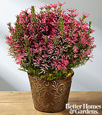 The FTD® Heathered Heights Mother's Day Plant by Better Homes and Gardens®