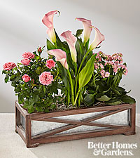 The FTD® Garden of Love by Better Homes and Gardens®