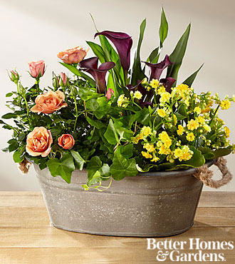 The FTD®Autumn Moods Blooming Dish Garden by Better Homes and Gardens®
