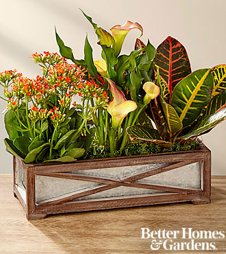 The FTD® Fall Focus Dish Garden by Better Homes and Gardens®