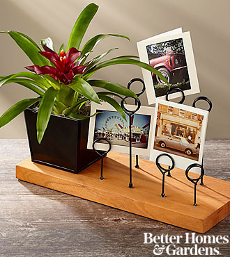 The FTD® Love Your Life Bromeliad Plant with Messenger Board by Better Homes and Gardens®