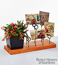 The FTD® Christmas Moments Zygo Cactus with Messenger Board by Better Homes and Gardens®