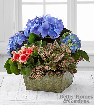 The FTD® Style Elements Dish Garden by Better Homes and Gardens® - Good