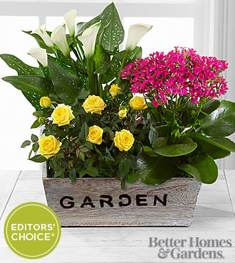 The FTD Sunlit Simplicity Dishgarden by Better Homes and Gardens