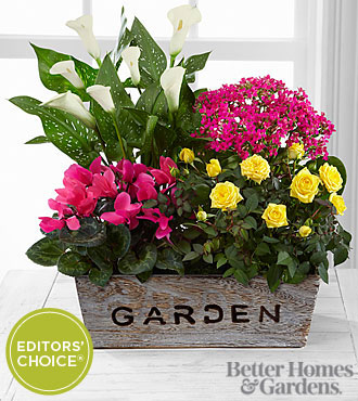 The FTD® Sunlit Simplicity Dishgarden by Better Homes and Gardens® - BEST