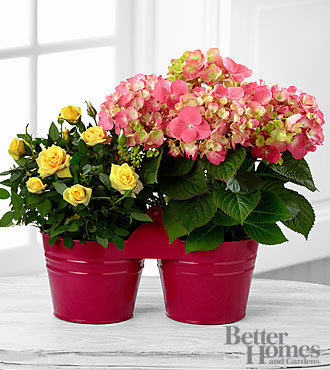 The FTD® Spring's Welcome Plant Duo by Better Homes and Gardens®