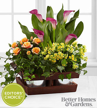 The FTD®  Fall Wonders Dishgarden by Better Homes and Gardens®
