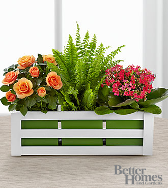 The FTD® Spring Surprises Plant Trio by Better Homes and Gardens® - BETTER