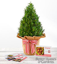 The FTD® Let in the Light Rosemary Tree & Recipe Cards by Better Homes and Gardens®