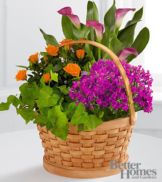 The FTD® Harvest Wishes Blooming Basket by Better Homes and Gardens® - BETTER