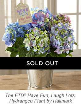 The FTD® Have Fun, Laugh Lots Hydrangea Plant by Hallmark