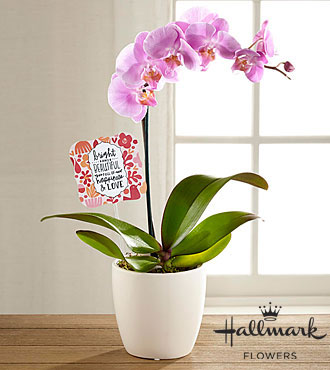 The FTD® Bright & Beautiful Orchid by Hallmark
