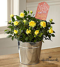 The FTD® Mother's Day Sunshine Mini Rose by Hallmark