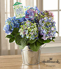 The FTD® Happiness Hydrangea by Hallmark