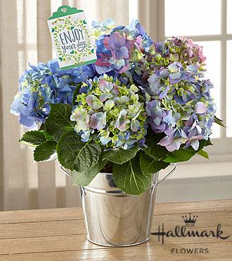 The FTD® Happiness Hydrangea by Hallmark