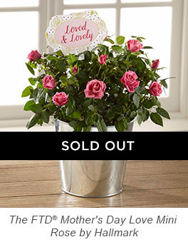 The FTD® Mother's Day Love Mini Rose by Hallmark