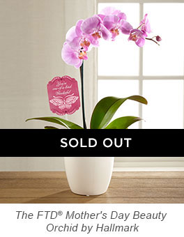 The FTD® Mother's Day Beauty Orchid by Hallmark