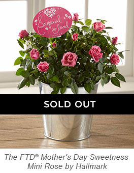The FTD® Mother's Day Sweetness Mini Rose by Hallmark