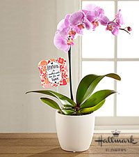 The FTD® Mother's Day Beauty Pink Orchid by Hallmark