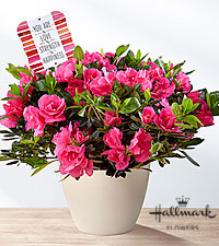 The FTD® Love, Strength, & Happiness Mother's Day Azalea by Hallmark