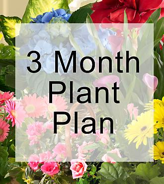 Monthly Blooming Plant Program - 3 Months