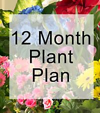 Monthly Blooming Plant Program - 12 Months