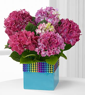 The FTD® Pick-Me-Up® Rainbow Falls Hydrangea Plant