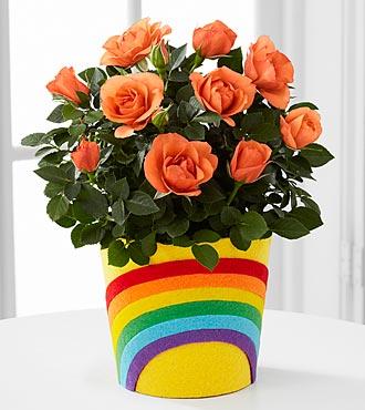 The FTD® Pick-Me-Up® Rainbow Roads Mini Rose