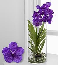 Vividly Violet Vanda Orchid