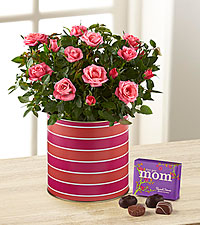 Just for Mom Mini Rose with Chocolates-Best