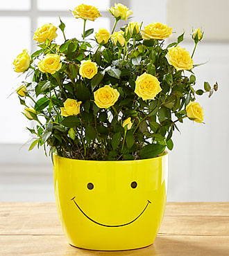 "Sending a Smile 6"" Mini Rose Plant"