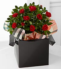 Heart of the Season Mini Rose