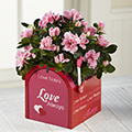 Love Notes Valentine's Day Azalea