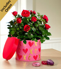 It's Love Valentine's Day Mini Rose with Chocolate Covered Oreo® - Better