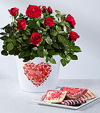 Follow Your Heart Valentine's Day Mini Rose with Chocolate Covered Graham Crackers