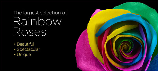 Rainbow roses multi colored flowers tie dye roses from for How much are rainbow roses