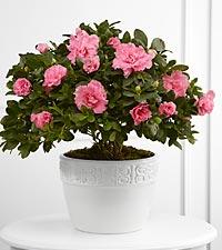 La jardinière Vibrant Sympathy™ de FTD®
