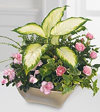 memorial plants popular funeral remembrance plants ftd