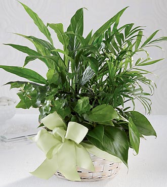 The FTD® Woodland Greens™ Basket