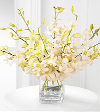 White Whispers Dendrobium Orchid Bouquet - 10 Stems - VASE INCLUDED