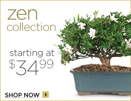 Zen Collection Bamboo & Bonsai