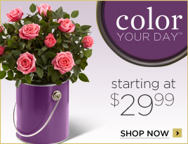 Plantshop Color Your Day